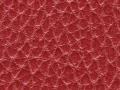 stellar-rhubarb